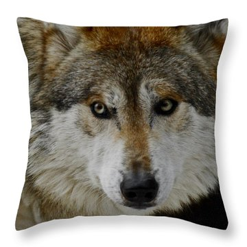 Caution Upclose Throw Pillow by Ernie Echols