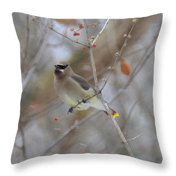 Cedar Wax Wing 2 Throw Pillow by David Arment
