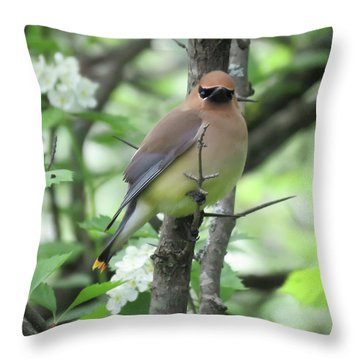 Cedar Wax Wing Throw Pillow by Alison Gimpel