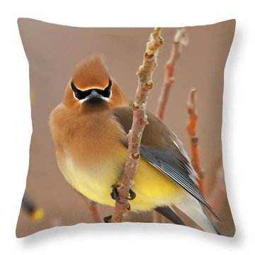 Cedar Wax Wing Throw Pillow by Carl Shaw