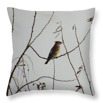 Cedar Wax Wing In Tree Throw Pillow by Kenneth Willis