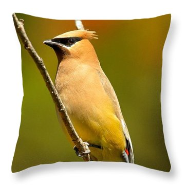 Cedar Waxwing Throw Pillow by Adam Jewell