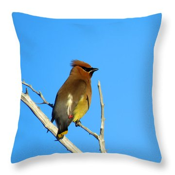 Cedar Waxwing Throw Pillow by Dianne Cowen
