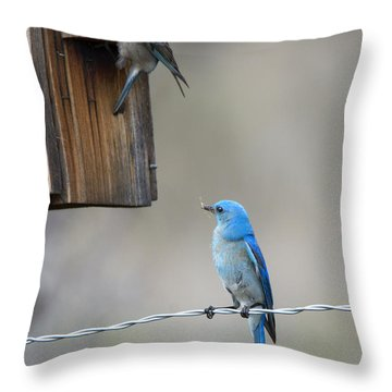 Checking The Nest Throw Pillow by Mike Dawson