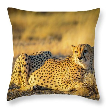 Cheetah Portrait Throw Pillow by Inge Johnsson