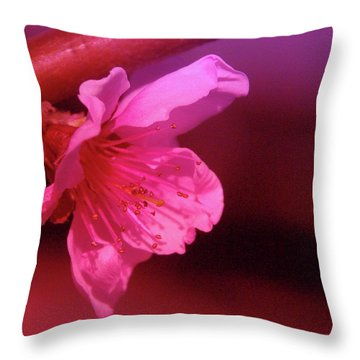 Cherry Blossom Throw Pillow by Jeff Swan