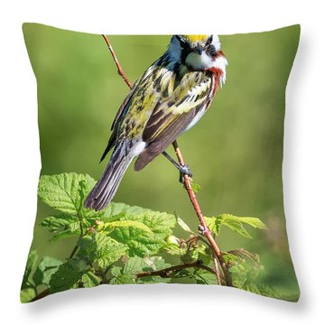 Chestnut Sided Warbler Throw Pillow by Bill Wakeley