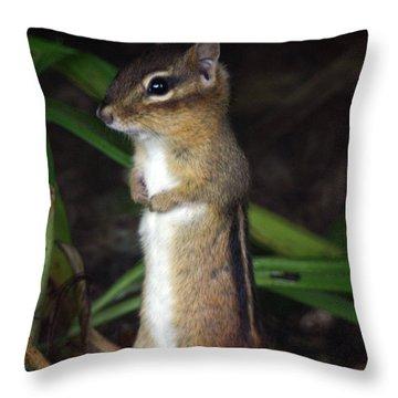 Chipmunk On Alert Throw Pillow by Karol Livote