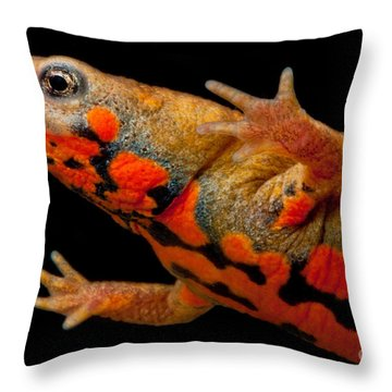 Chuxiong Fire Belly Newt Throw Pillow by Dant� Fenolio