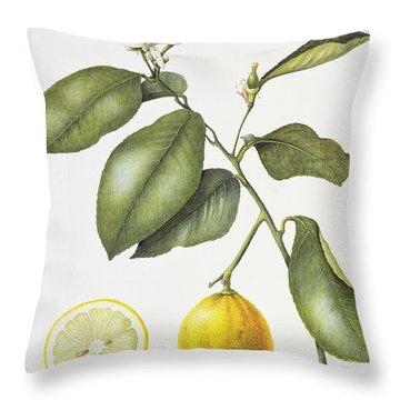 Citrus Bergamot Throw Pillow by Margaret Ann Eden