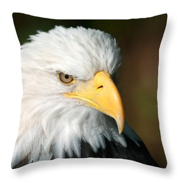Close Portrait Of A Bald Eagle Throw Pillow by Ralph Lee Hopkins