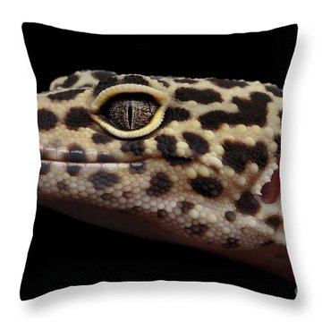 Close-up Leopard Gecko Eublepharis Macularius Isolated On Black Background Throw Pillow by Sergey Taran