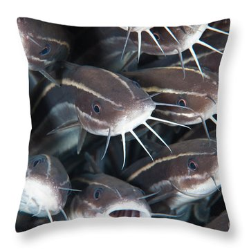 Close-up View Of A Group Of Catfish Throw Pillow by Beverly Factor