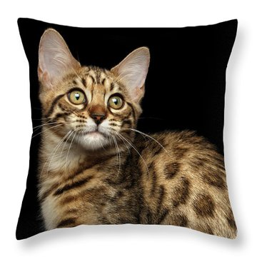 Closeup Bengal Kitty On Isolated Black Background Throw Pillow by Sergey Taran