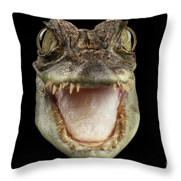 Closeup Head Of Young Cayman Crocodile , Reptile With Opened Mouth Isolated On Black Background, Fro Throw Pillow by Sergey Taran