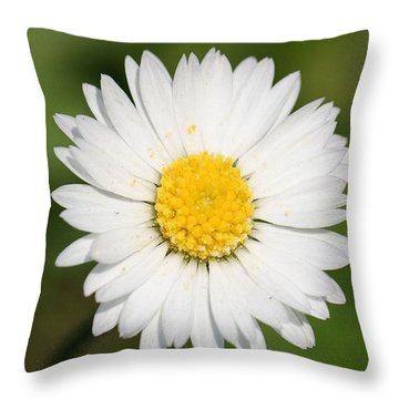 Closeup Of A Beautiful Yellow And White Daisy Flower Throw Pillow by Tracey Harrington-Simpson