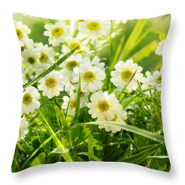 Closeup Of Daisies In Field Throw Pillow by Sandra Cunningham