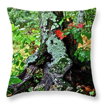 Colorful Stump Throw Pillow by Diana Hatcher