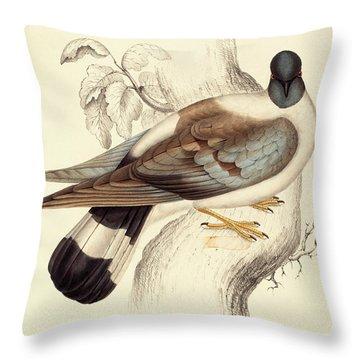 Columba Leuconota, Snow Pigeon Throw Pillow by Elizabeth Gould