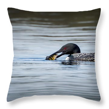 Common Loon Throw Pillow by Bill Wakeley