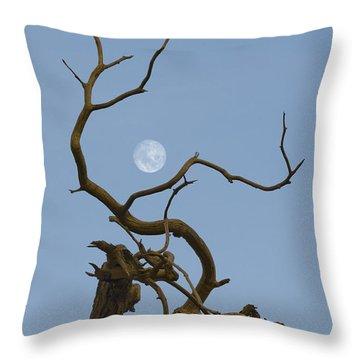 Cotton Moon Throw Pillow by Sophie De Roumanie