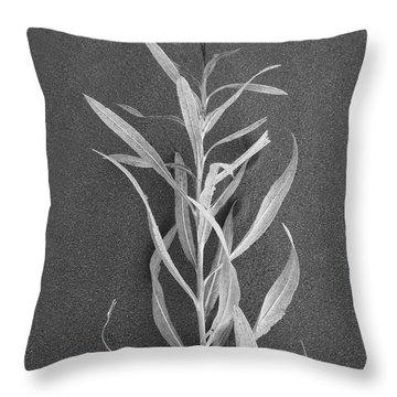 Dahlia Throw Pillow by Skip Hunt