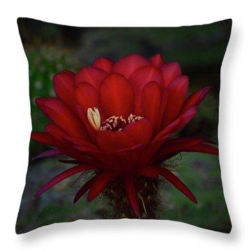 Deep Red Throw Pillow by Saija  Lehtonen