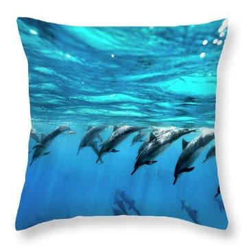 Dolphin Dive Throw Pillow by Sean Davey