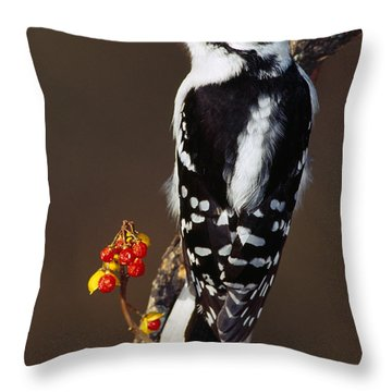 Downy Woodpecker On Tree Branch Throw Pillow by Panoramic Images