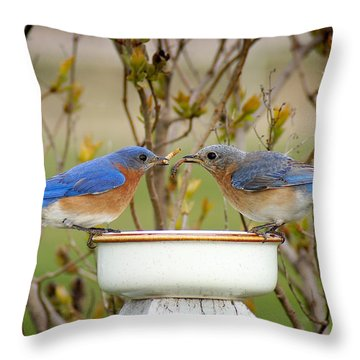 Early Bird Breakfast For Two Throw Pillow by Bill Pevlor