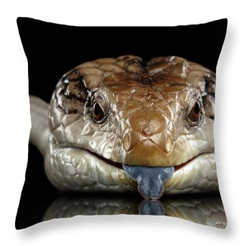 Eastern Blue-tongued Skink, Tiliqua Scincoides, Isolated On Black Background Throw Pillow by Sergey Taran