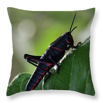 Eastern Lubber Grasshopper Throw Pillow by Richard Rizzo