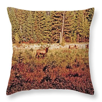 Elk Harem Throw Pillow by Al Bourassa