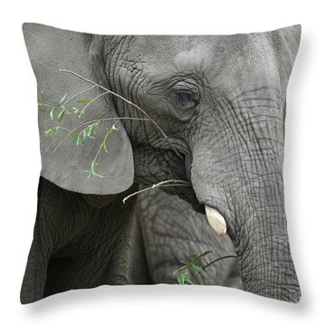 Elly At Lunch Throw Pillow by Karol Livote