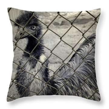 Emu At The Zoo Throw Pillow by Luke Moore