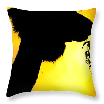 Endless Alpaca Throw Pillow by TC Morgan