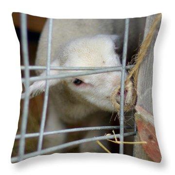 Escape Artist Throw Pillow by Linda Mishler