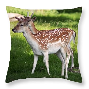 Fallow Deer In Richmond Park Throw Pillow by Rona Black