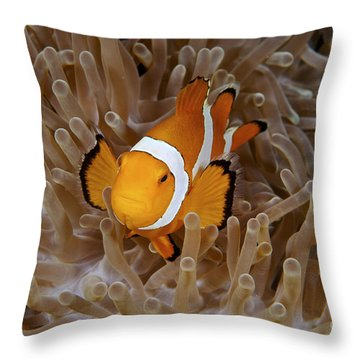 False Clownfish Throw Pillow by Steve Rosenberg - Printscapes