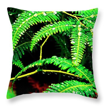 Ferns And Raindrops Throw Pillow by Thomas R Fletcher