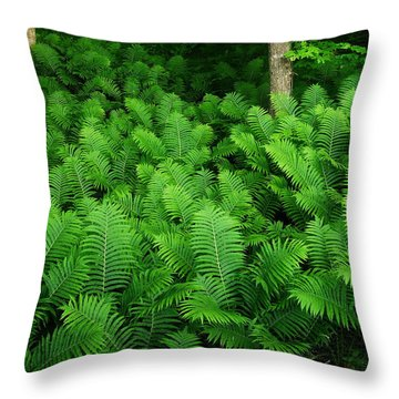 Ferns Throw Pillow by Michael Peychich
