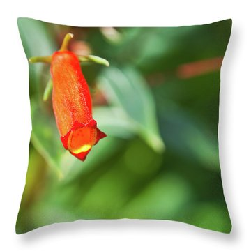 Firecracker Blossom Throw Pillow by Douglas Barnett