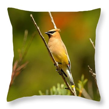 Fishercap Cedar Waxwing Throw Pillow by Adam Jewell