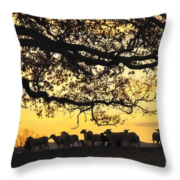 Flock At Sunrise Throw Pillow by Thomas R Fletcher