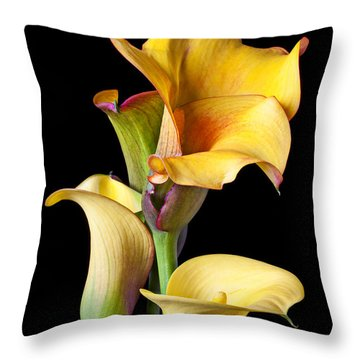 Four Calla Lilies Throw Pillow by Garry Gay
