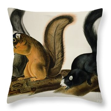 Fox Squirrel Throw Pillow by John James Audubon