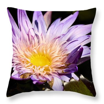 Frilly Lilly Throw Pillow by Teresa Mucha