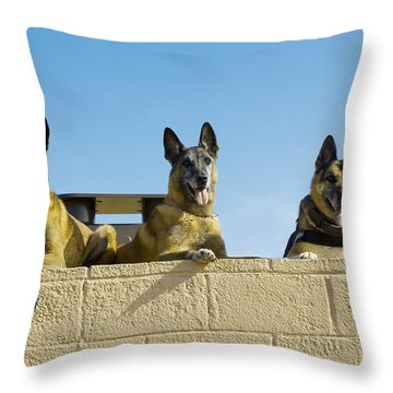 German Shephard Military Working Dogs Throw Pillow by Stocktrek Images