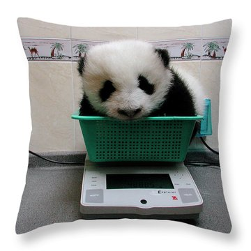 Giant Panda Ailuropoda Melanoleuca Baby Throw Pillow by Katherine Feng
