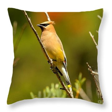 Glacier Cedar Waxwing Throw Pillow by Adam Jewell